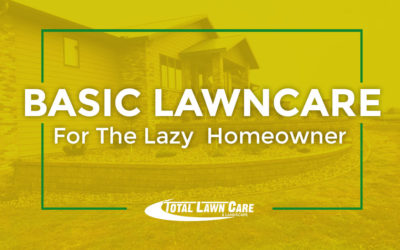 Basic Lawn Care for the Lazy Homeowner