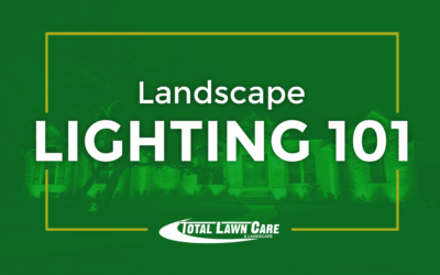 Landscape Lighting 101