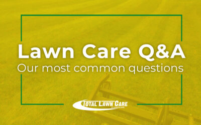 Answering Your Lawn Care Questions